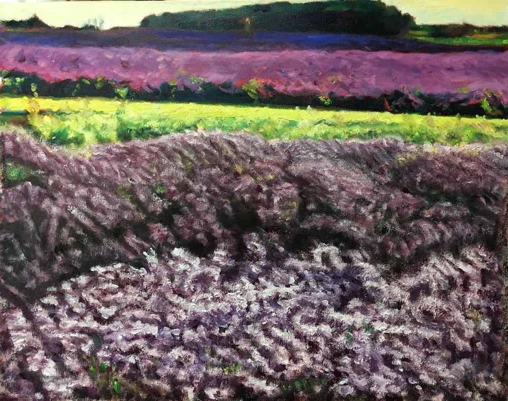 Lavender Fields near Snowshill (20 Feb 2019)