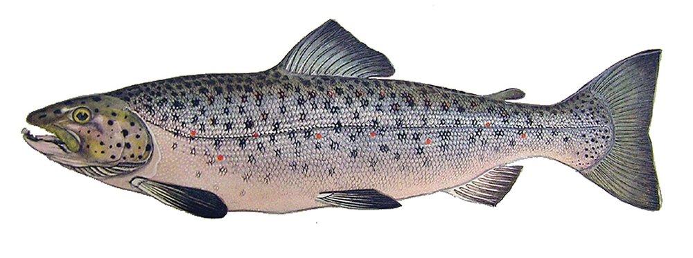 fish3.jpeg