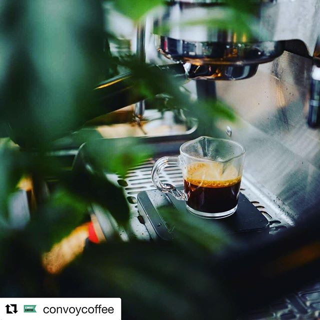 #Repost @convoycoffee with @get_repost ・・・ Welcome to the jungle 🌿☕️ 📷: @mr.photy
