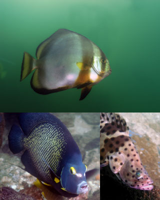 fish400a.jpg