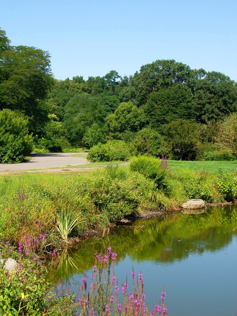 Small pond within Arnold Arboretum. Photo by Daderot, English language  Wikipedia .