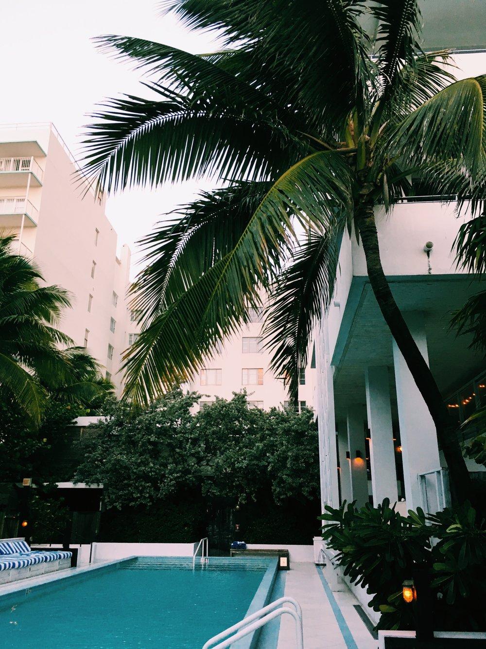 pool soho beach house miami.jpg