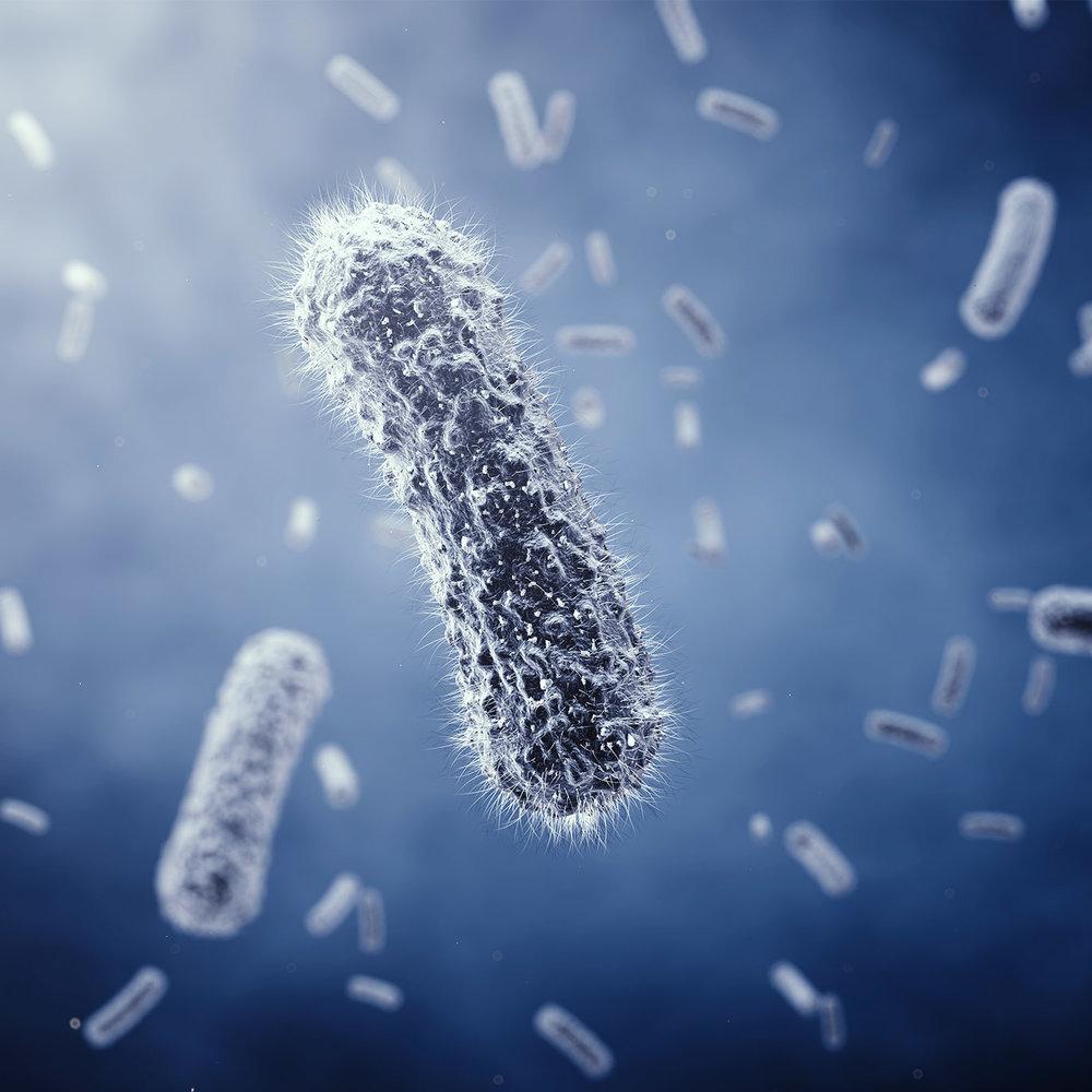 Anti Bacteria NEW.jpg