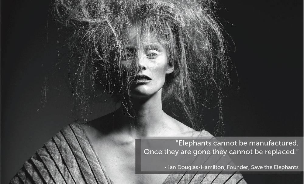 Sponsor Deck_Elephantasia3.jpg