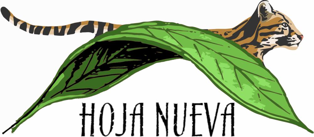 @hojanueva