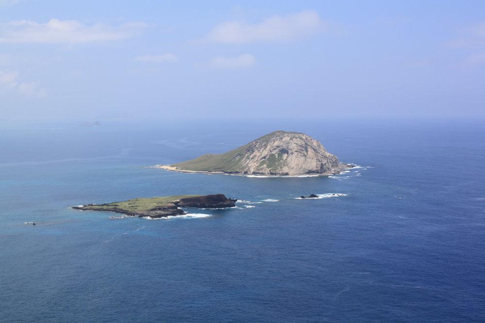 rabbit island2.JPG