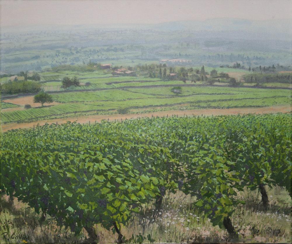 Vineyard at Lachassagne