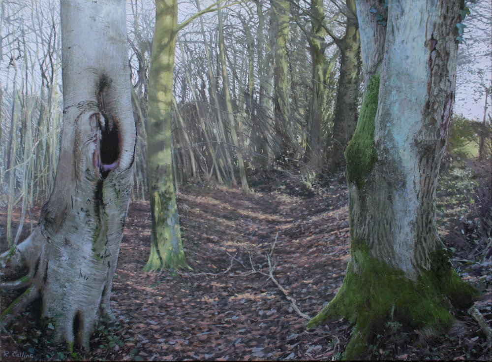 Winter Trees on the Cotswold Way