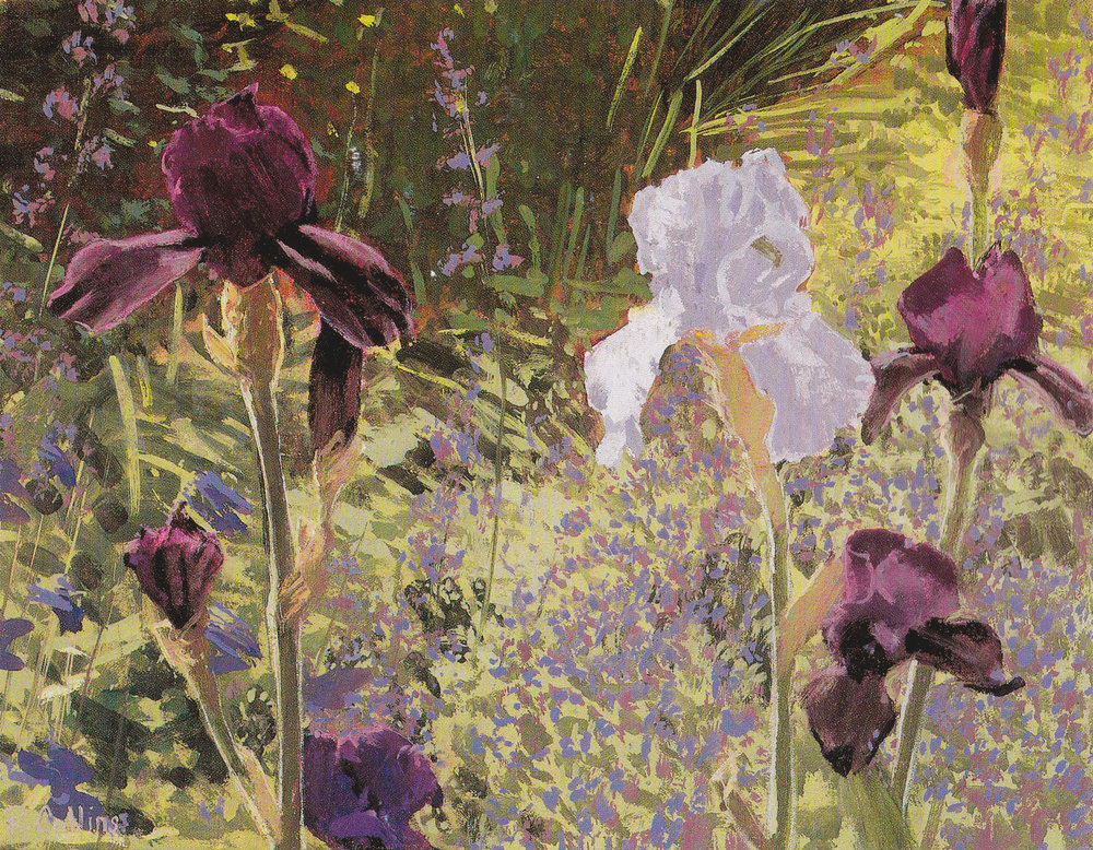 Only very rarely do I just come across a beautiful subject without having to add or adjust the elements to make a satisfying composition. But I walked up my garden path one afternoon and saw this exactly as you see it here. I got out my paints and in a couple of hours the picture was finished. Purple and blue irises and catmint set off by the deep shadow behind and light catching the edges of the flowers.