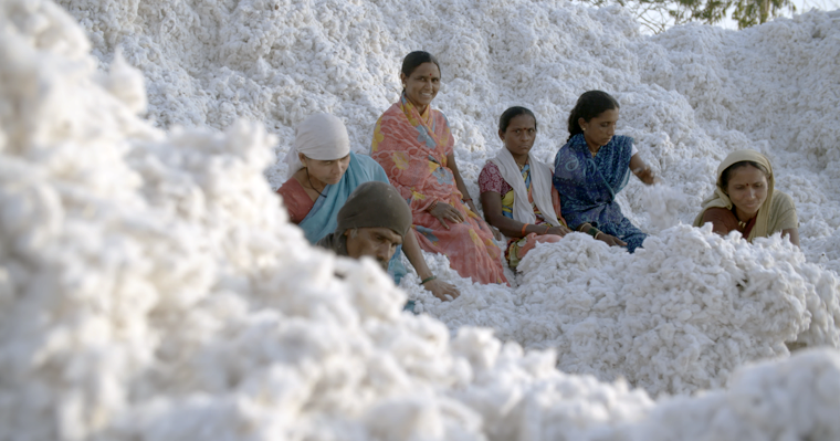 <p><strong>GINNING</strong>The seeds are removed from the cotton.<i>More →</i></p>