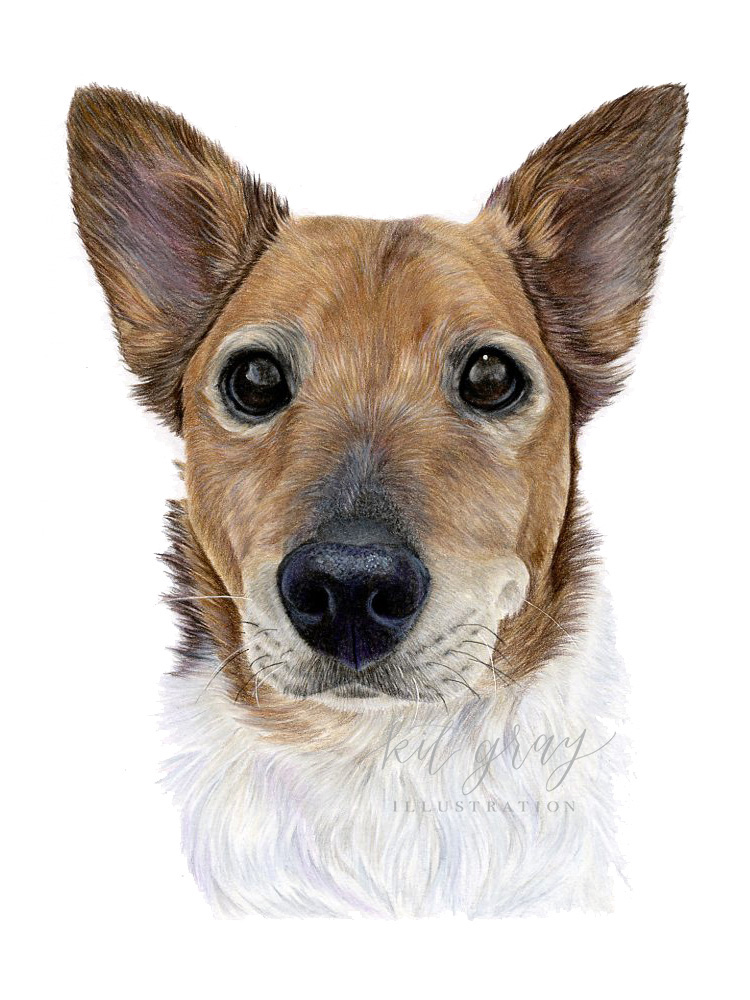"""Jozi - Mixed Breed Dog in Colored Pencil, 9""""x12"""""""