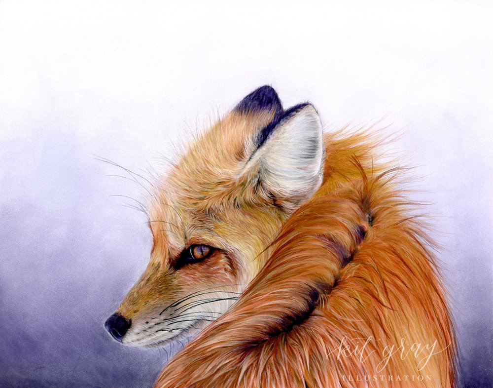 """Red Fox - Pastel, 11"""" x 14"""" [FOR SALE]"""