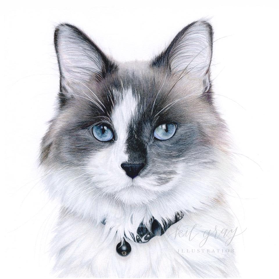 "Google - Domestic Medium Hair Cat in Colored Pencil, 10"" x 10"""