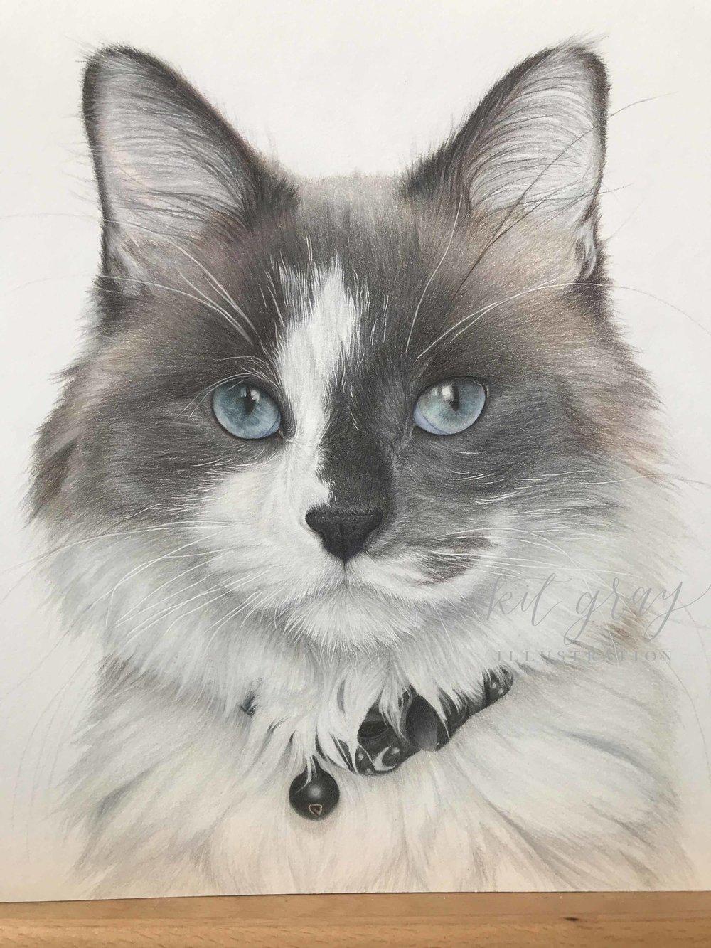 """""""Google"""" - 10"""" x 10"""" Colored Pencil Pet Portrait"""