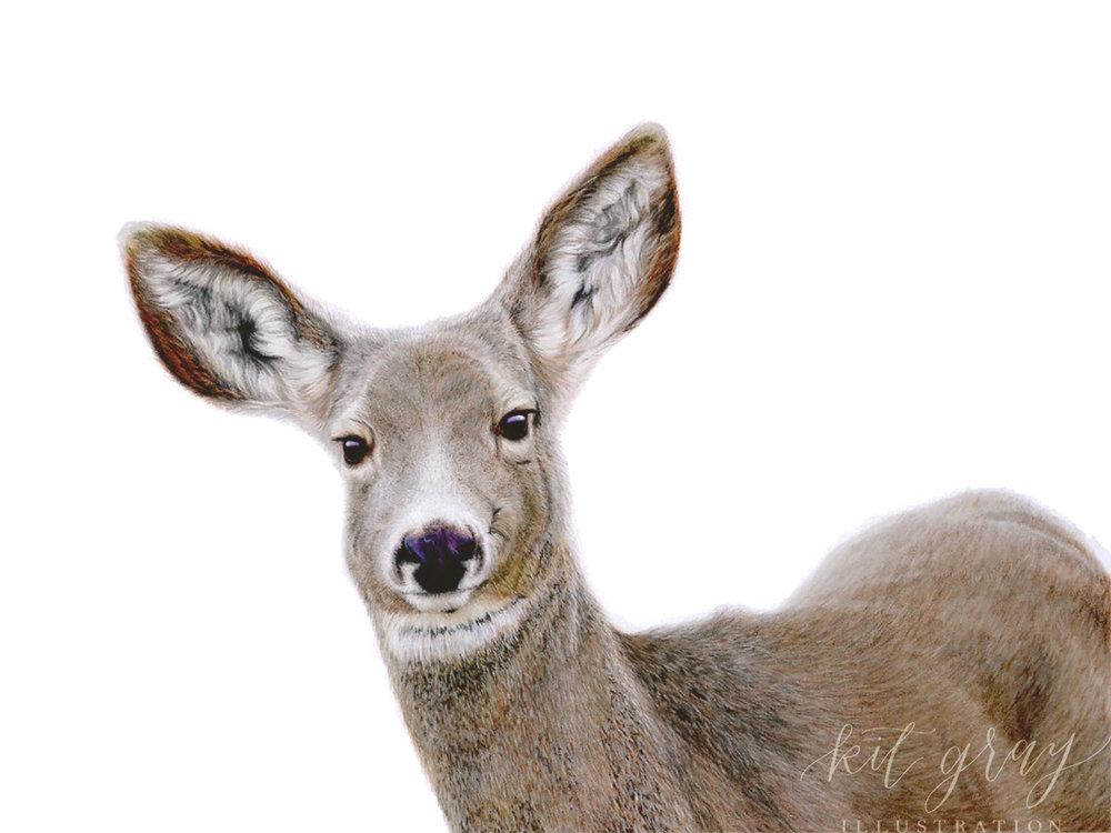 "Mindfulness - Mule Deer in Pastel, 9"" x 12"" [FOR SALE]"