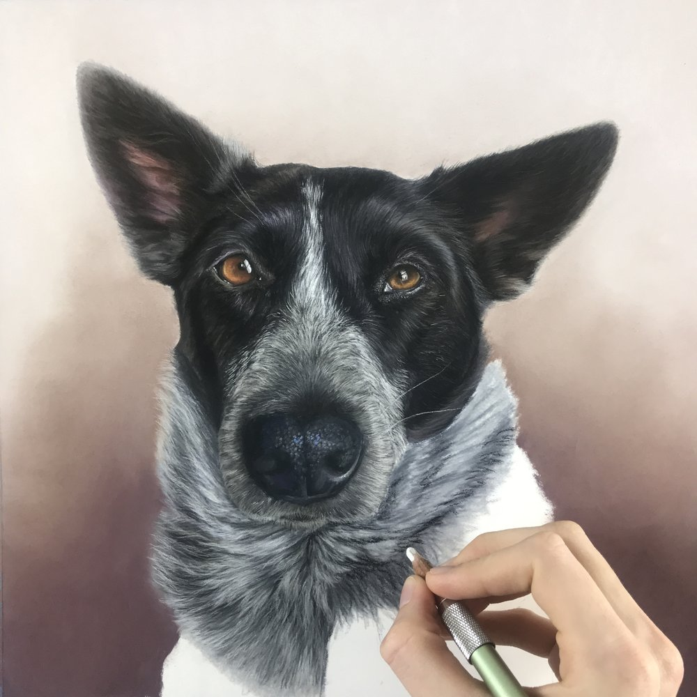 "Custom pet portrait  in soft pastel and pastel pencils, 12"" x 12"""