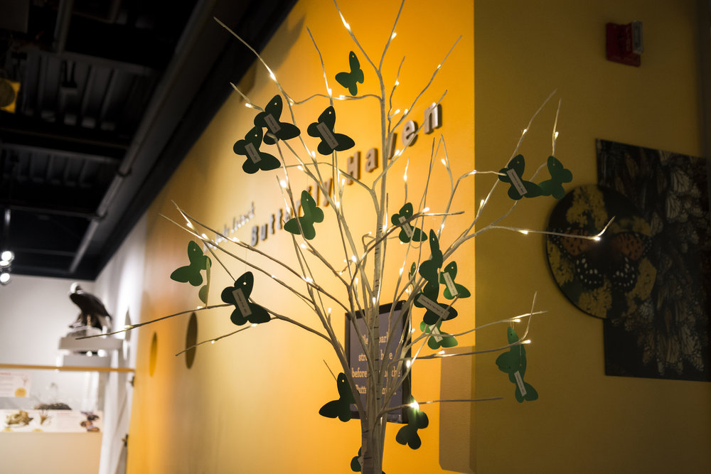 nature_museum_butterfly_haven_tree_fundraising_gala_event_planner