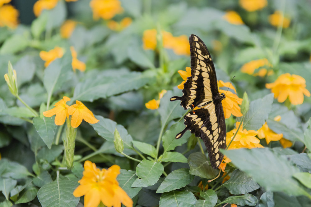 butterfly_haven_nature_museum_chicago_event_planner_coordinator_gala