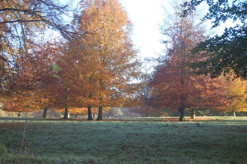 Blickling-Hall-Estate-autumn.jpg