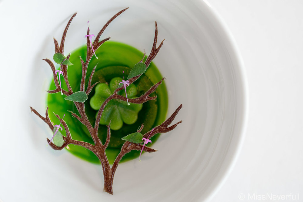 3.3 Wood sorrel & woodruff