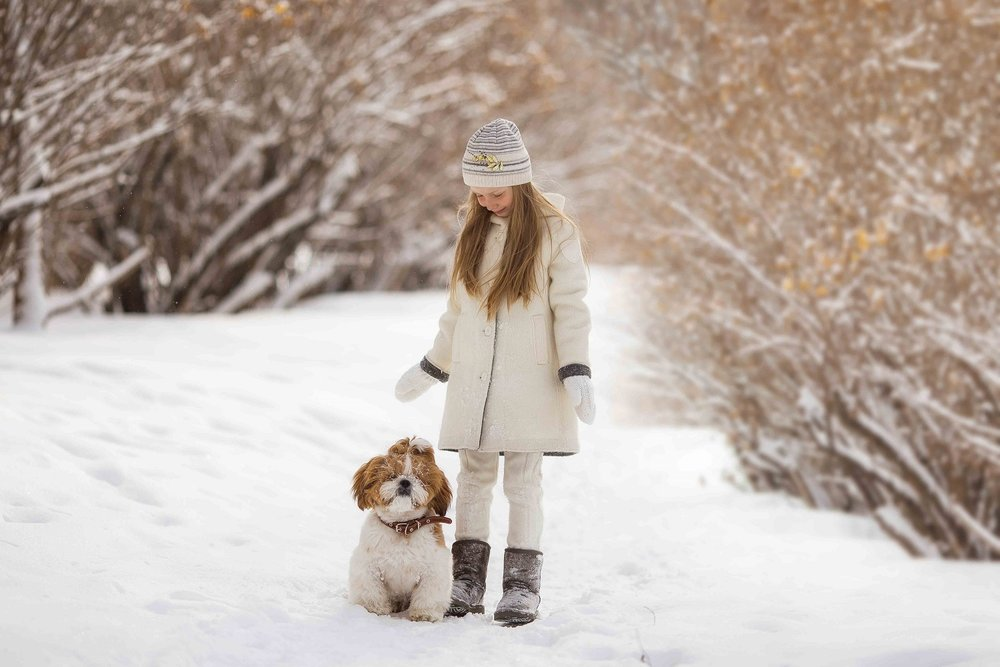 protect pets during winter