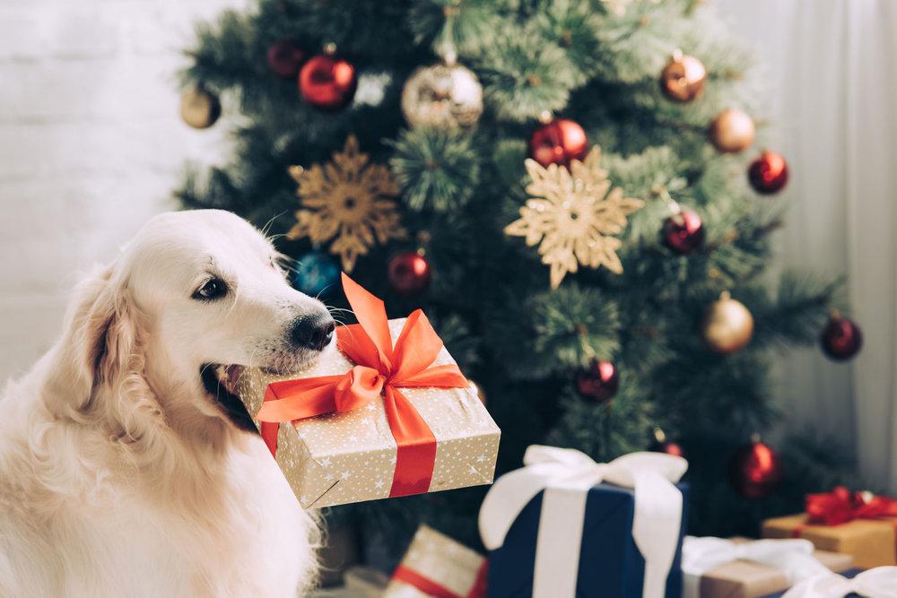 dog new year