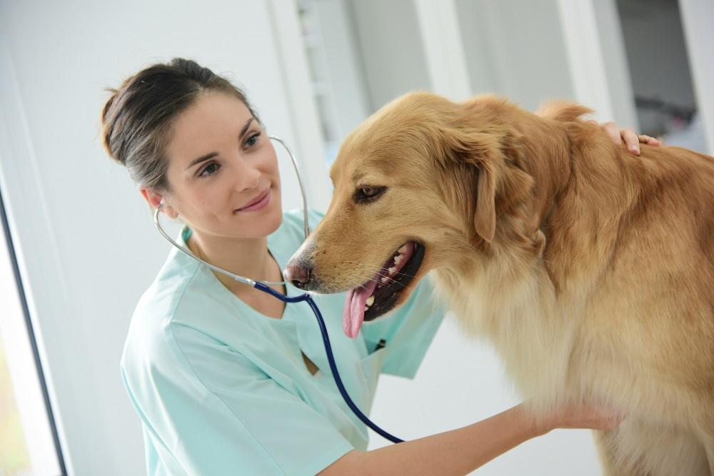 Veterinary insurance