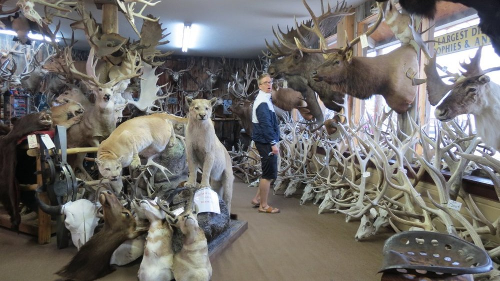 Gunnison CO antler and mount store.