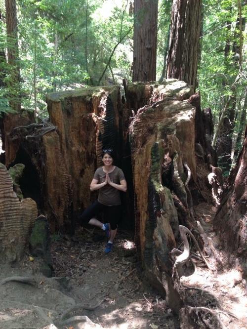 Redwoods, 2014