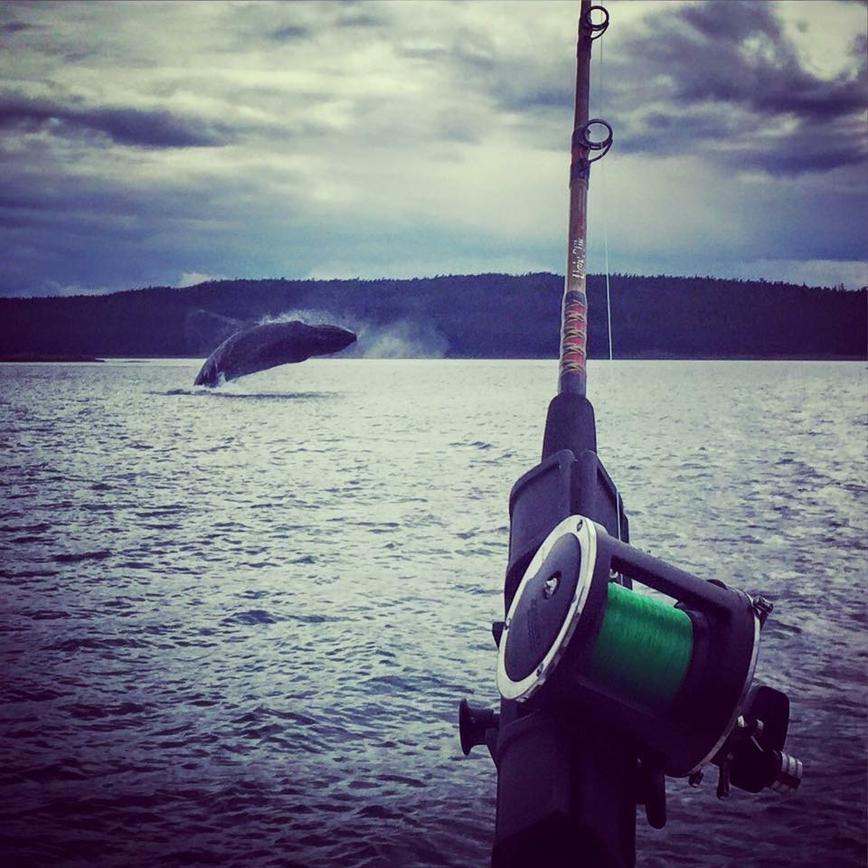 Sport Fishing and Whale Watching with Forty Ninth Fathom Charters, Juneau, AK
