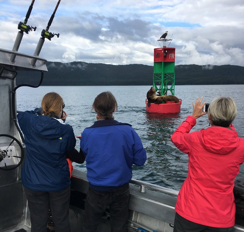 Whale watching and wildlife viewing- Juneau, Alaska