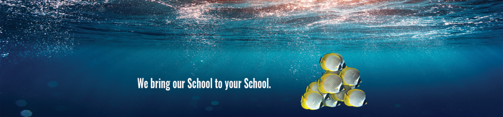 SchoolofFish_Banner_Website.png