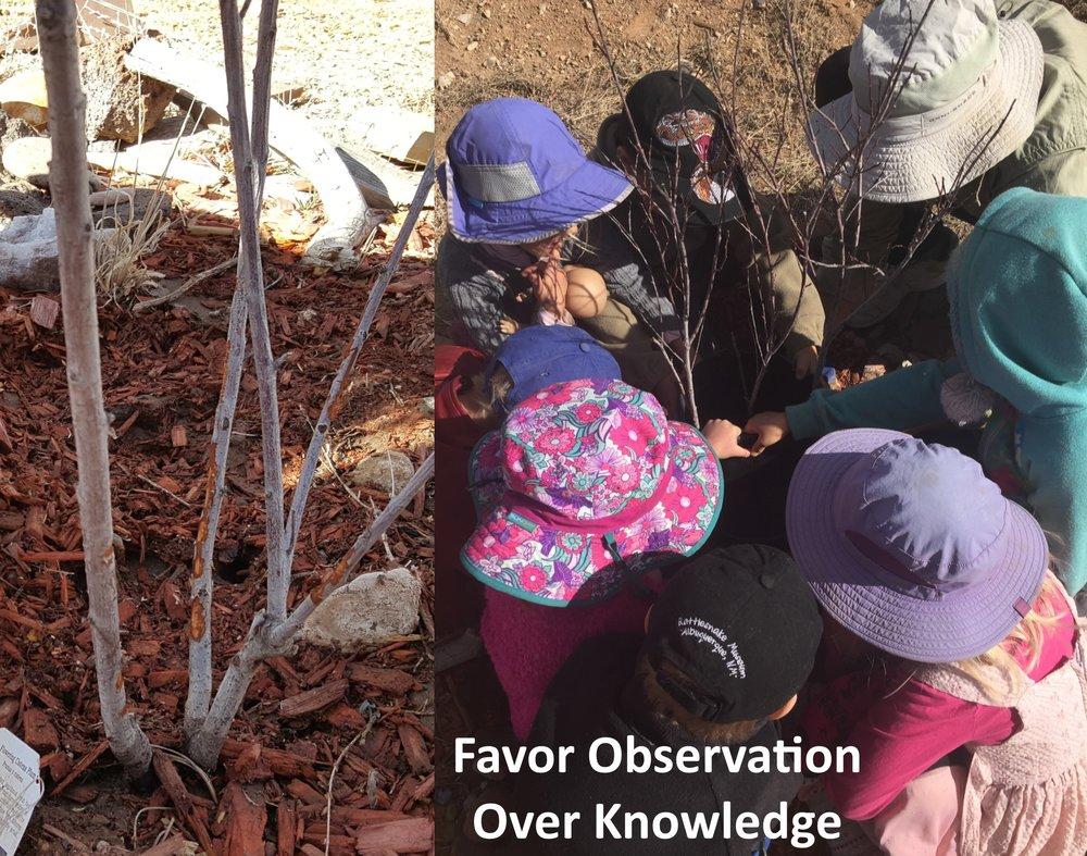 Favor Observation Over Knowledge.jpg