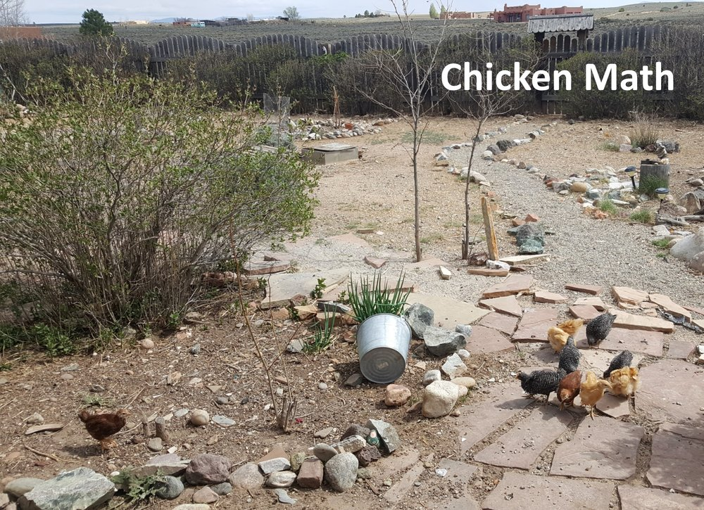 Chicken Math.jpg