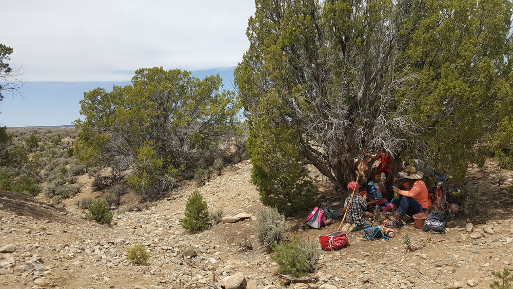 On a windswept mesa, one tree makes all the difference.