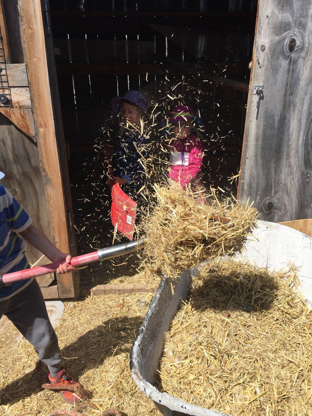 The hay hanging in midair is mesmerizing.