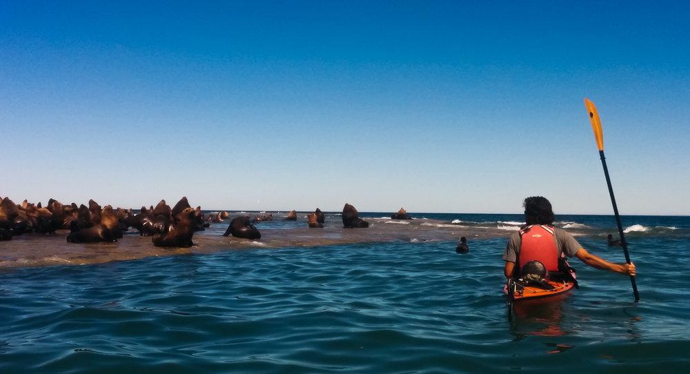 Patagonia Sea Lions