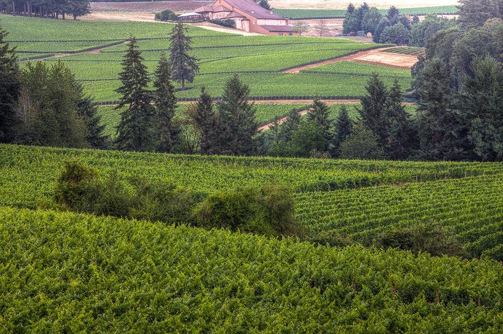 EOT_WINE_Sokol-blosser-winery-expaned-view-1.jpg
