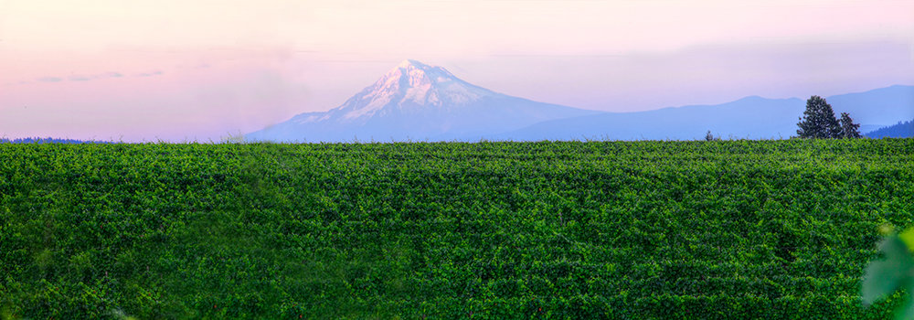 EOT_WINE_Sokol-Blosser-Winery-with-Mount-Hood-1.jpg