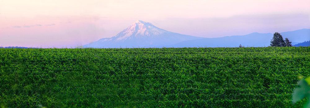 EOT_WINE_Sokol-Blosser-Winery-with-Mount-Hood-1.jpg