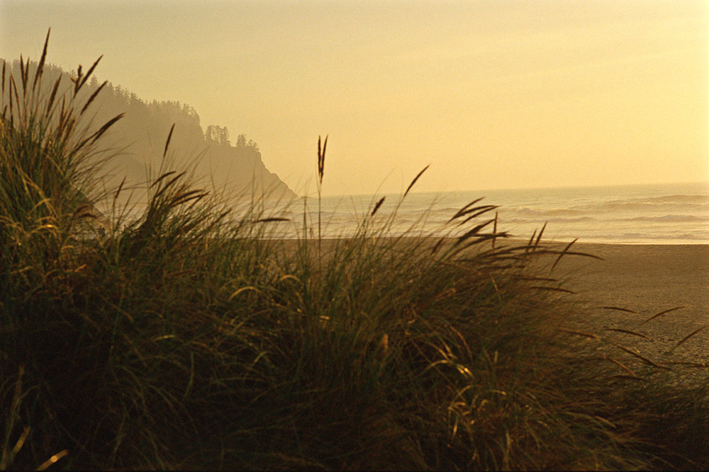 EOT_COAST_Grass-cascade-head-oregon-coast.jpg