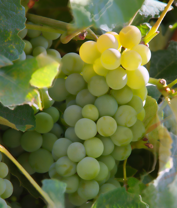 END_WINE_Donalds-Grapes-1.jpg