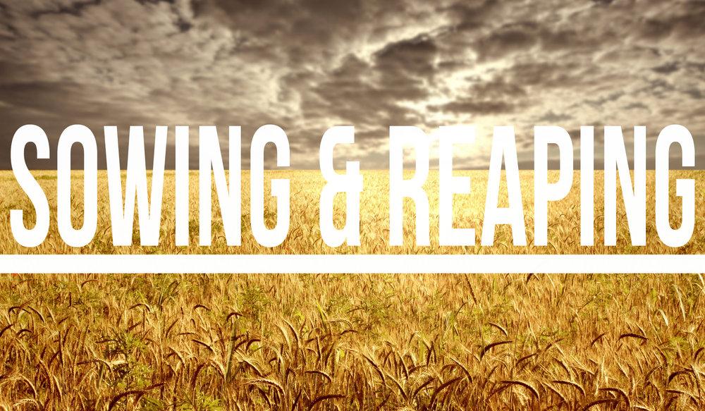 reaping_blog.jpg