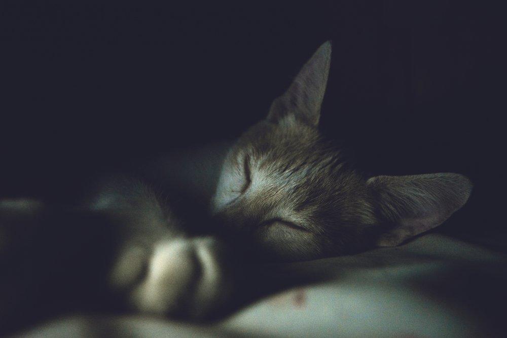 cat-nap.jpeg