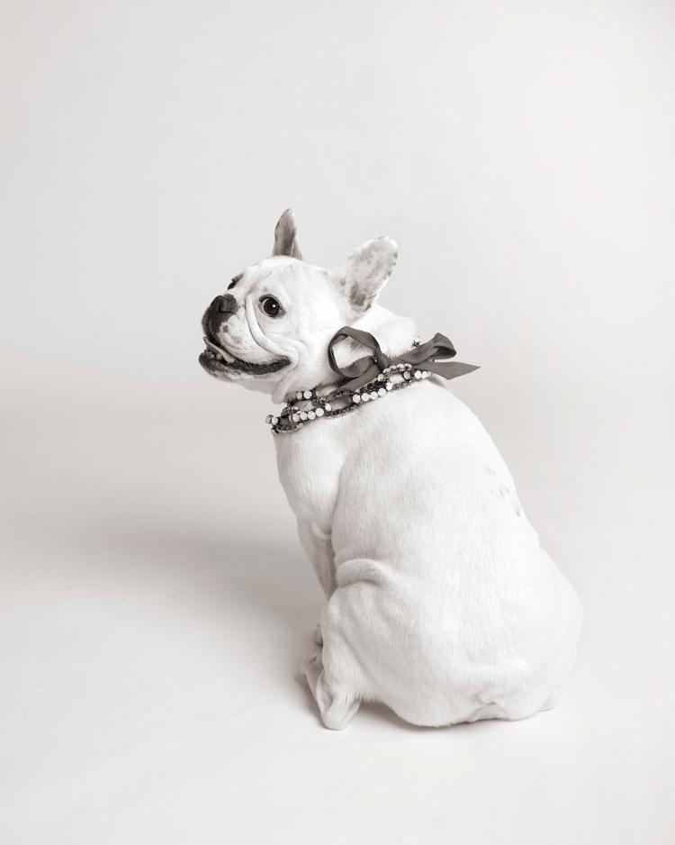 dearheartstudios_dogs_3.jpg