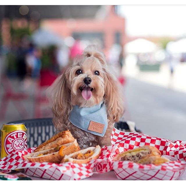 Dallas🚨 WE ARE BACK! 🍔It's starting to feel like summer ☀️🍹We love this picture of our friend @kimcheethemaltipoo 💙This weekend ---- Boho Market! 👩🏻🌾 Thank you for all your support and love! ❤️See y'all Saturday 9-5 pm and Sunday 10-5 pm ☀️Bring all the family!💕 Photo credits📸: @kimcheethemaltipoo @dallasfarmersmarket . . . . . . . . . #lunchdate #lunchdallas #cubanintexas #cubanfood #dallascuban #dallasbaby #dallas #dallascubanfood #cubanintexas #cubansandwichdallas#cateringdallas#dallasfarmers#dallasfarmersmarket#repost