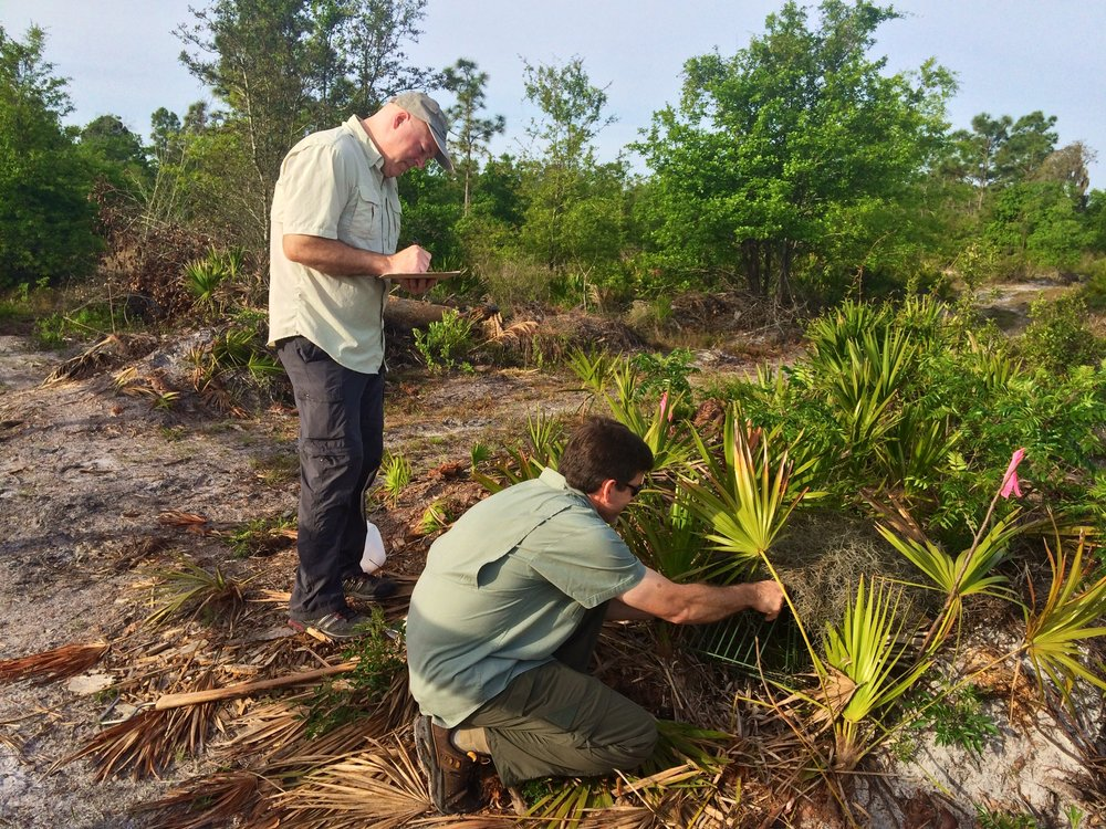 Photo Credit: Florida Fish and Wildlife Service, Volunteers Don Corbin and Tim O'Neill train to monitor and trap the invasive Argentine Black and White Tegu at a private property in Hillsborough County.