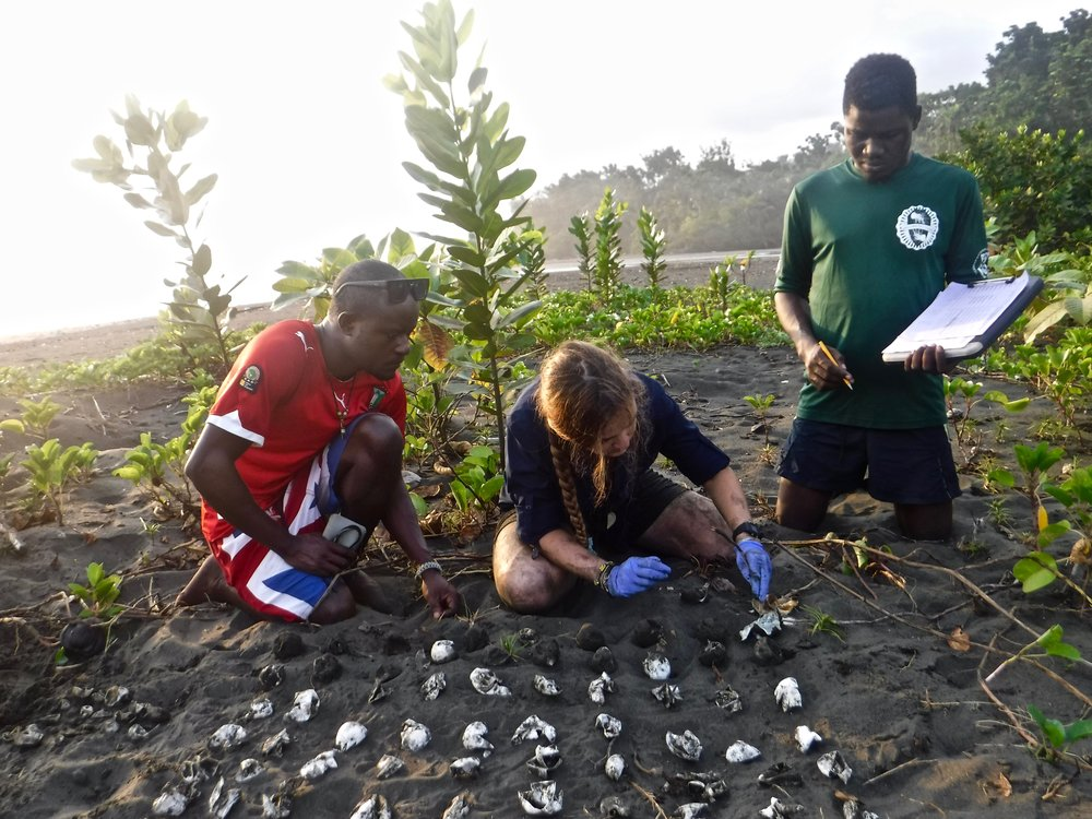 Leatherback Nest Excavation Training in Africa