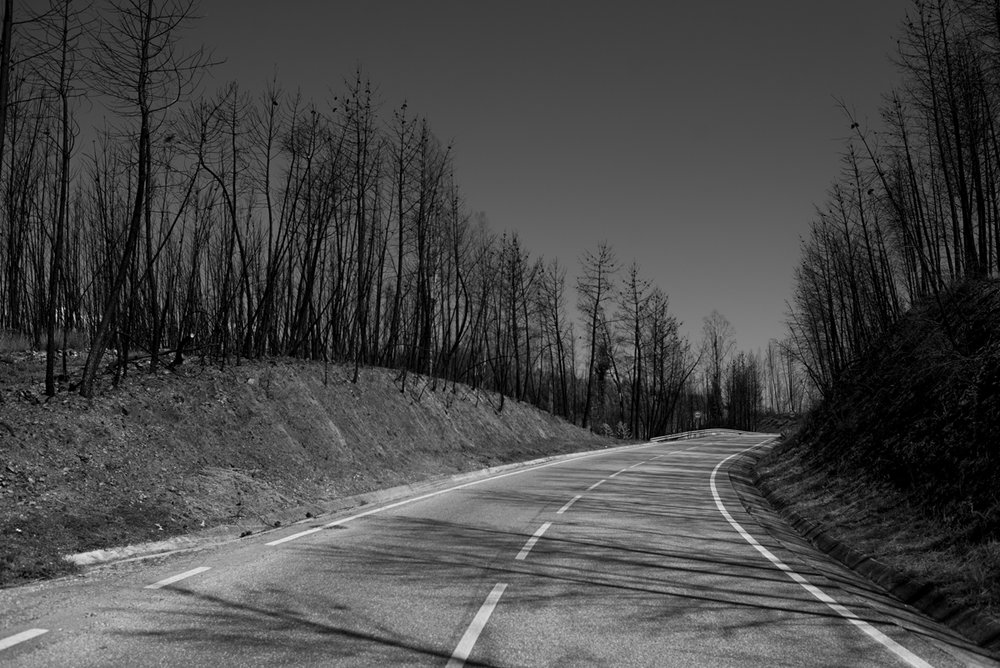 Trecho da estrada EN 236-1 com platação de eucalipto dos dois lados, em Pedrógão Grande, Portugal. Setembro 2018. © Lucas Landau