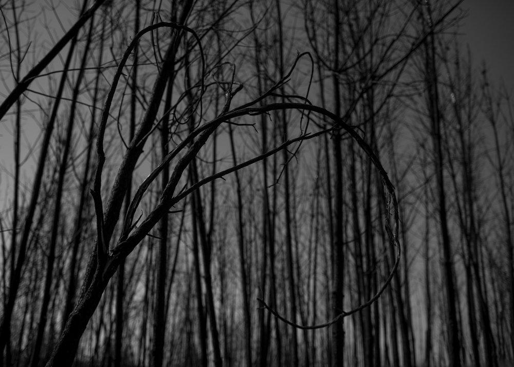 Floresta de eucalipto queimada em Pedrógão Grande, Portugal. Setembro 2018. © Lucas Landau